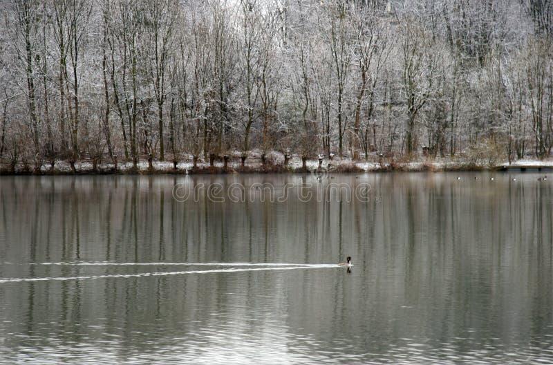 报道的湖横向反射的雪结构树冬天 免版税库存照片
