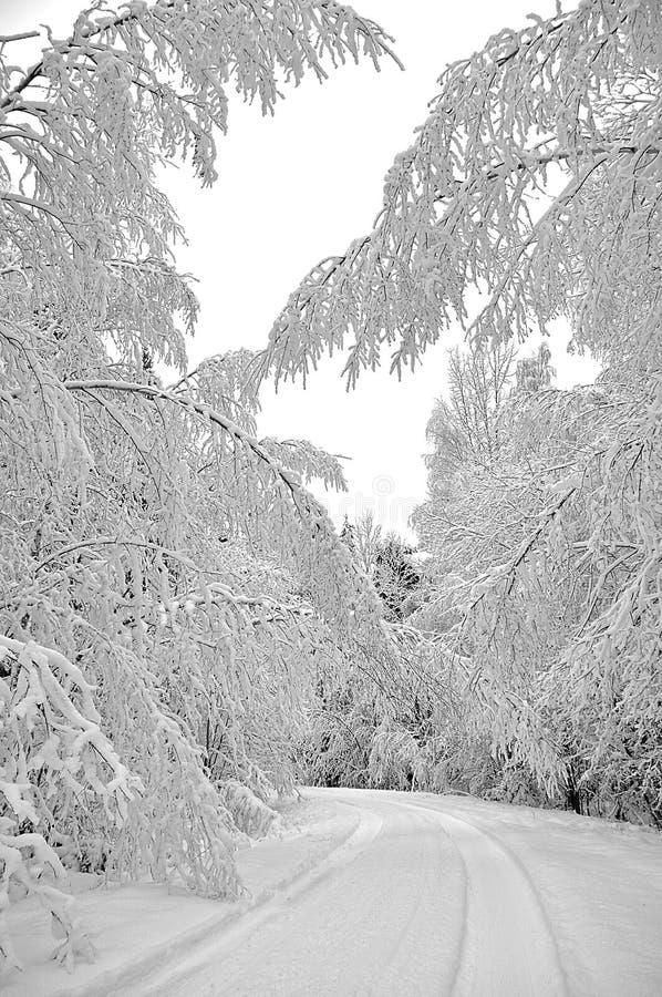 报道的雪结构树冬天 免版税图库摄影