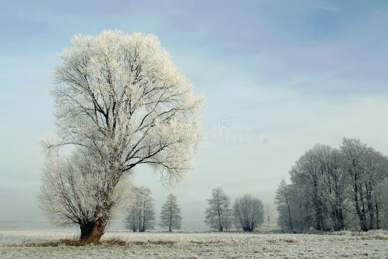 报道的霜横向多雪的结构树冬天 库存照片