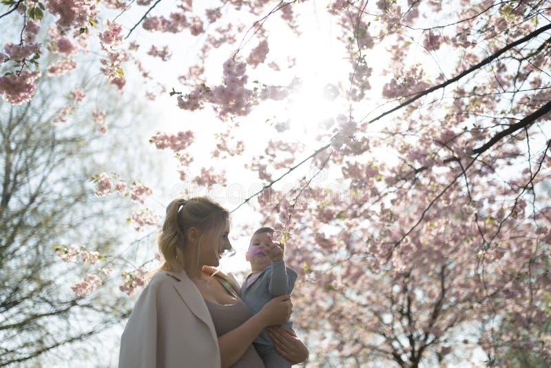 抱她的小小儿子男孩孩子的年轻母亲妈妈在与落的桃红色瓣的开花的佐仓樱桃树下和 库存图片