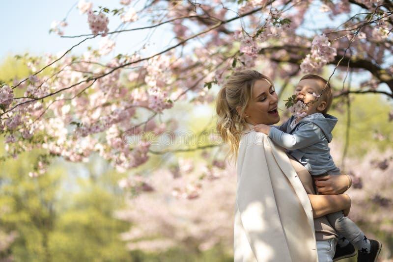 抱她的小小儿子男孩孩子的年轻母亲妈妈在与落的桃红色瓣的开花的佐仓樱桃树下和 库存照片