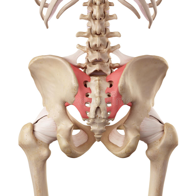 抵骨与喀骨间韧带 向量例证
