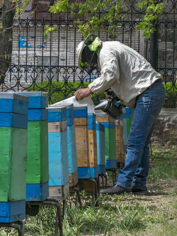 抽与老金属蜂吸烟者的蜂农蜂房在春天庭院里 免版税图库摄影