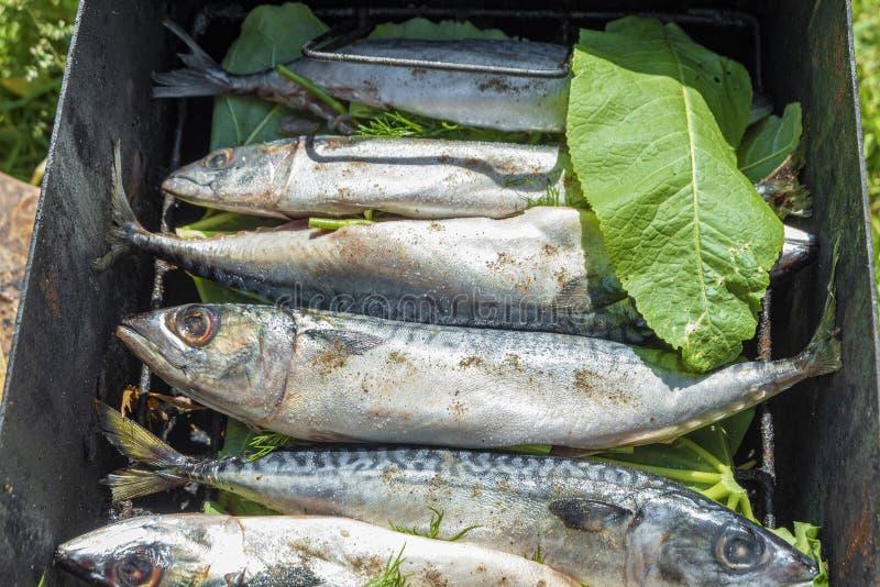 抽烟的准备的鱼在格栅 烹调的新鲜的鲭鱼鱼 库存照片