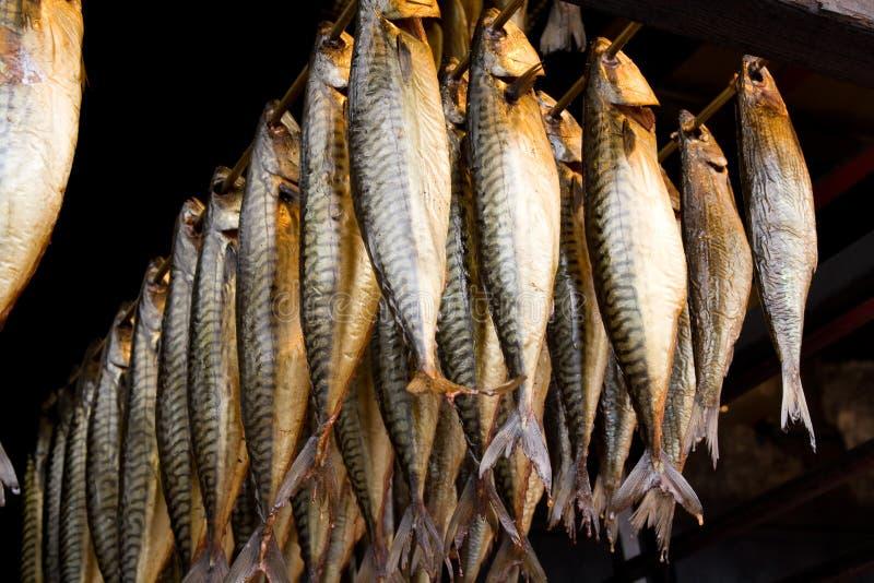 抽烟的鱼 免版税库存照片