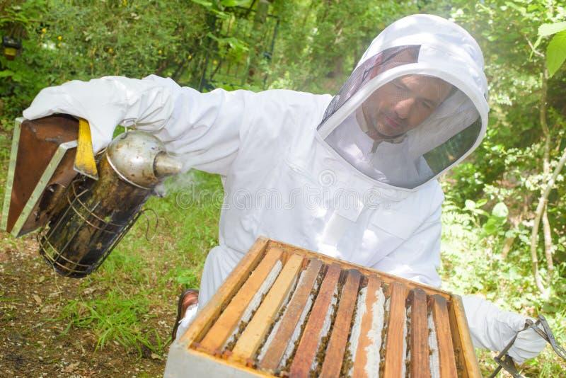 抽蜂的养蜂家 库存照片