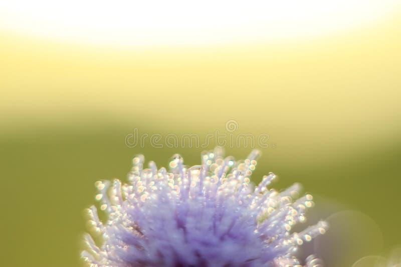 抽象下落特写镜头在一朵干燥花的与易变的焦点 库存照片