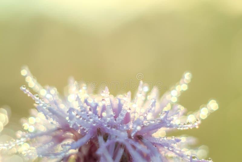 抽象下落特写镜头在一朵干燥花的与易变的焦点 图库摄影