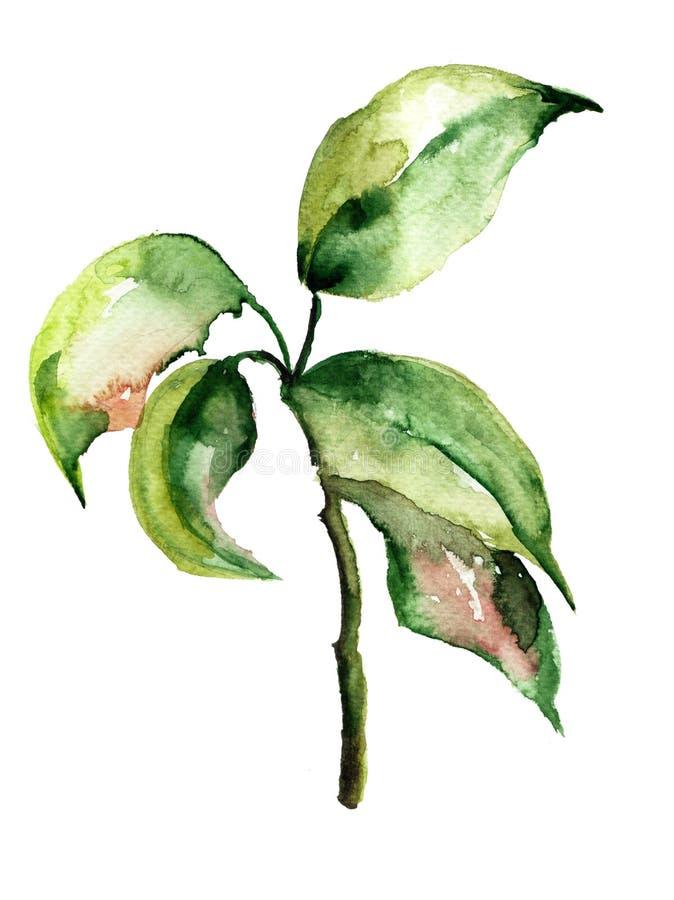 抽象丙烯酸酯的花卉例证水彩 向量例证