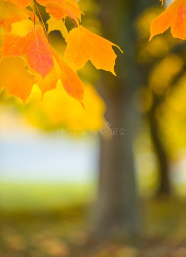 抽象五颜六色的秋天背景 图库摄影