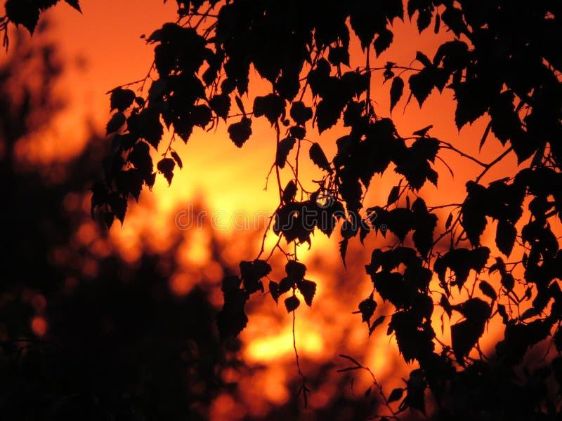 抽象叶子背景,美好的树枝,温暖的太阳光 库存照片