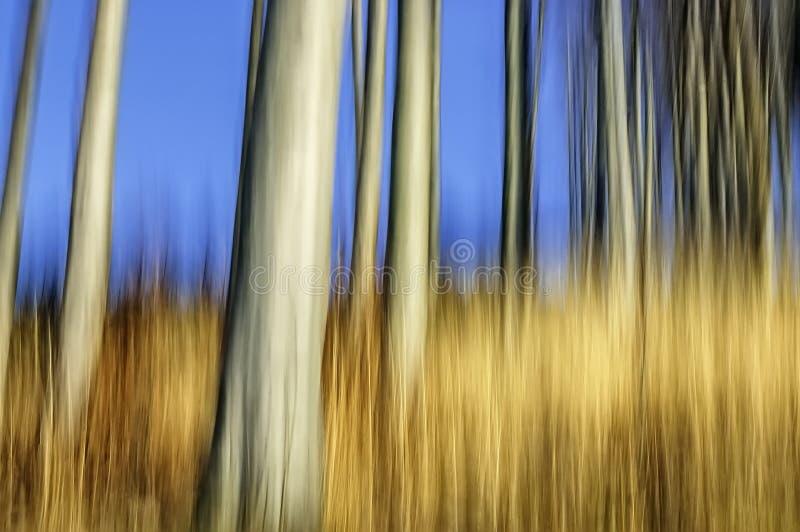 抽象山毛榉森林 免版税库存图片