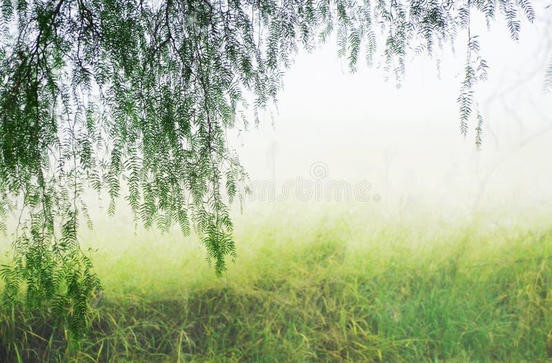 抽象幻想背景有薄雾的不可思议的神秘的秘密森林 免版税库存照片