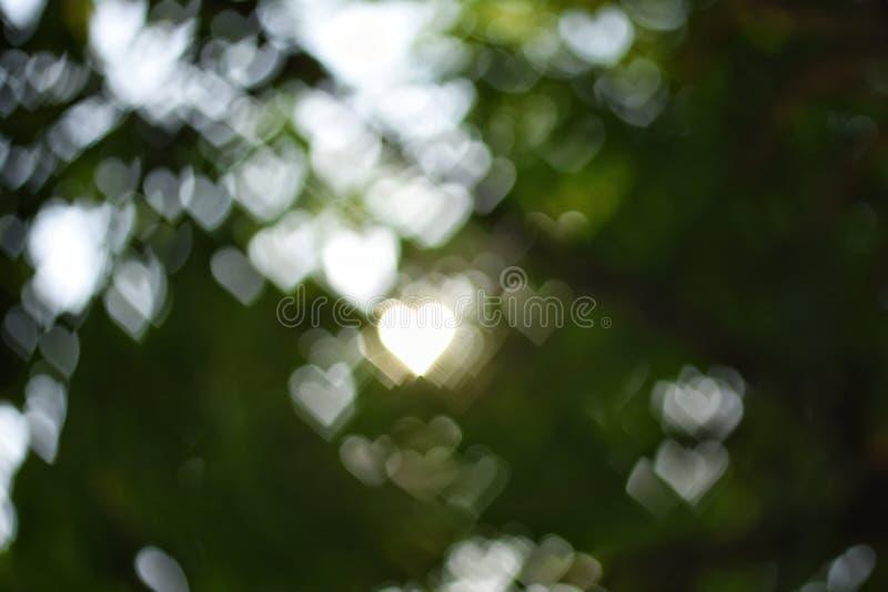 抽象心脏bokeh绿色背景 免版税库存照片
