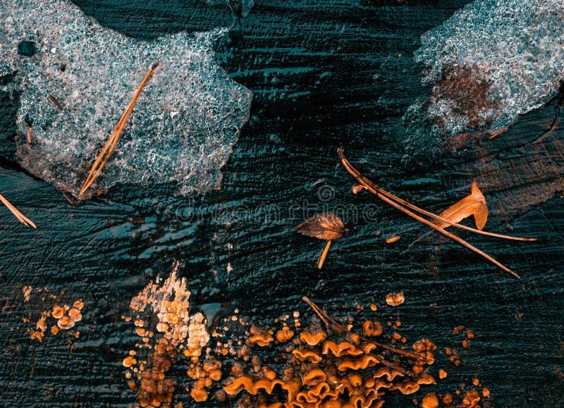 抽象木冬天baclground 库存图片