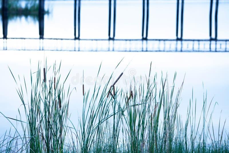 抽象木桥在湖,轻轻地表面反射了,并且一座桥梁的形状在水中,用茅草盖生长在湖边 库存图片