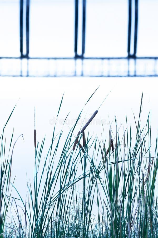 抽象木桥在湖,轻轻地表面反射了,并且一座桥梁的形状在水中,用茅草盖生长在湖边 免版税库存照片