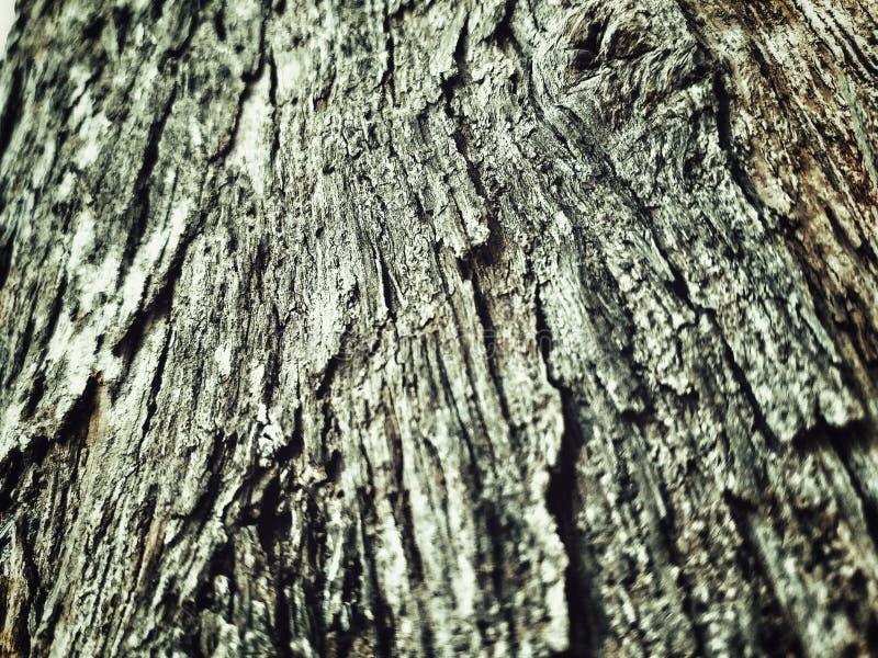 抽象树干,好的纹理 免版税库存图片