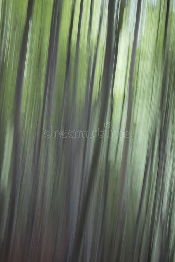抽象树照片 免版税库存照片