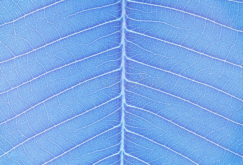 抽象样式特写镜头表面艺术口气在蓝色新鲜的叶子的构造了在艺术口气的背景 库存图片
