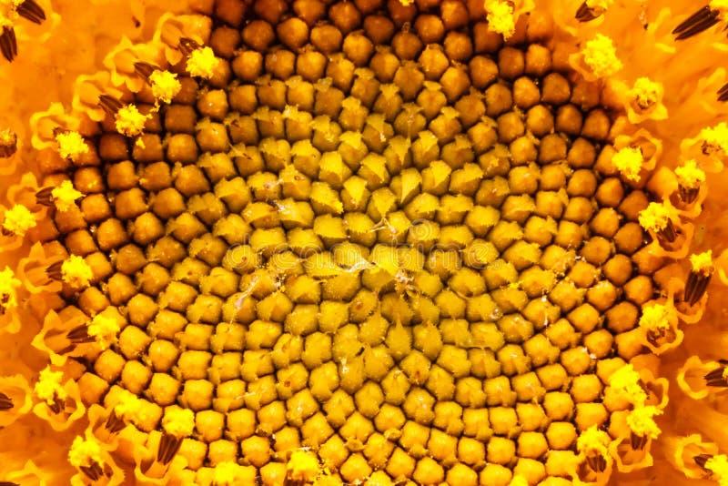 抽象桔子 库存照片