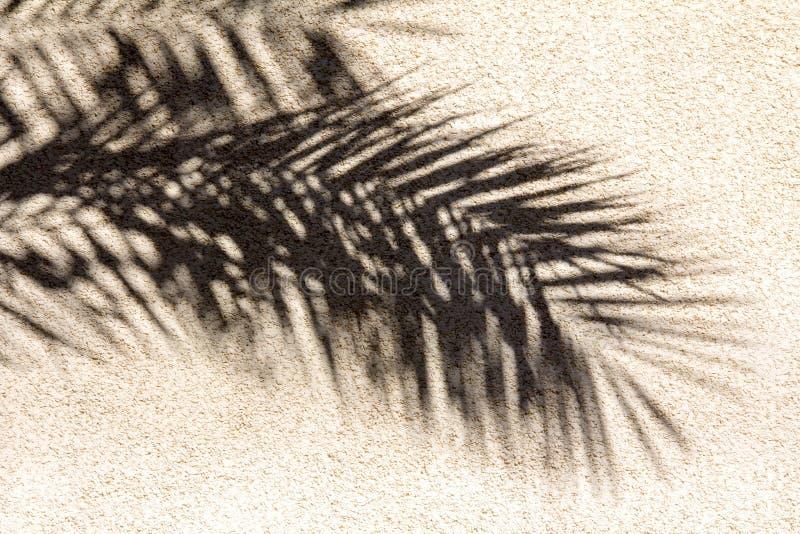 抽象棕榈事假阴影 库存照片