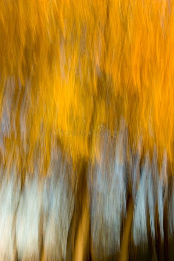 抽象榆木树丛印象主义者 库存照片