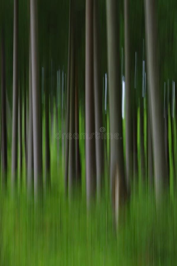 抽象模糊的杉树森林 库存图片