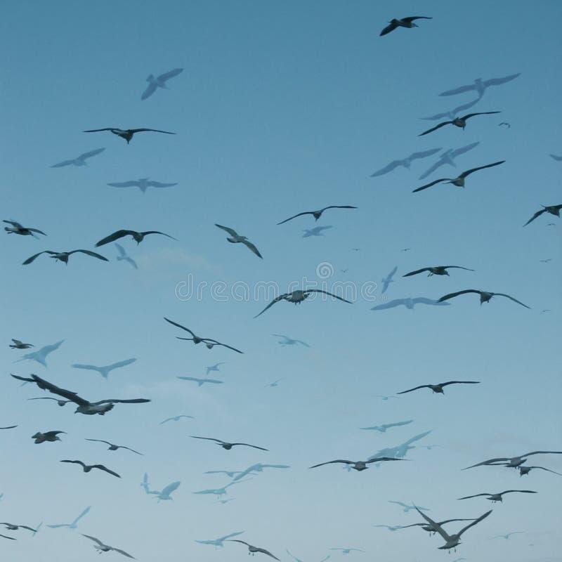 抽象海鸥 皇族释放例证