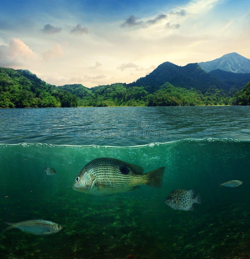 抽象热带水下的海洋生活 库存照片