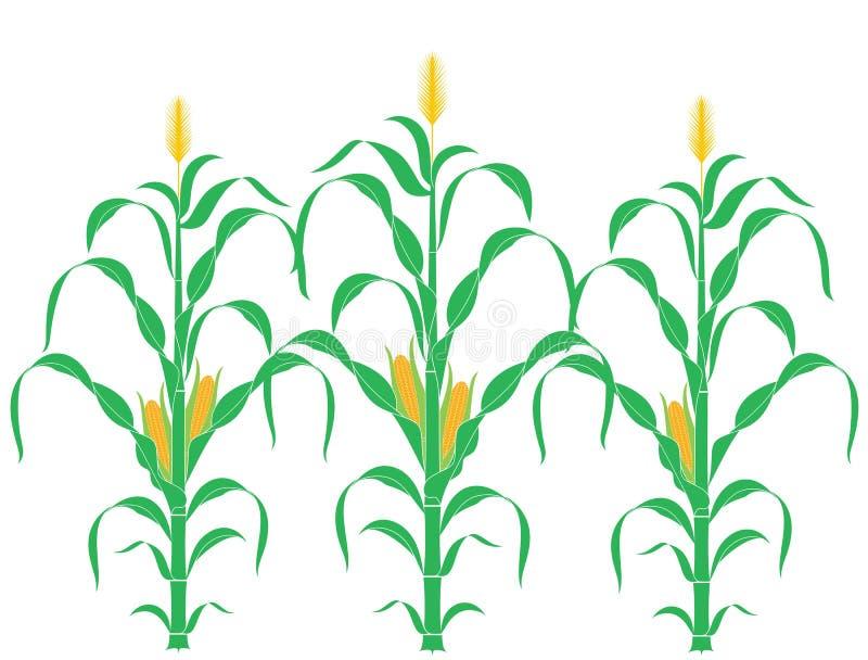抽象玉米 皇族释放例证