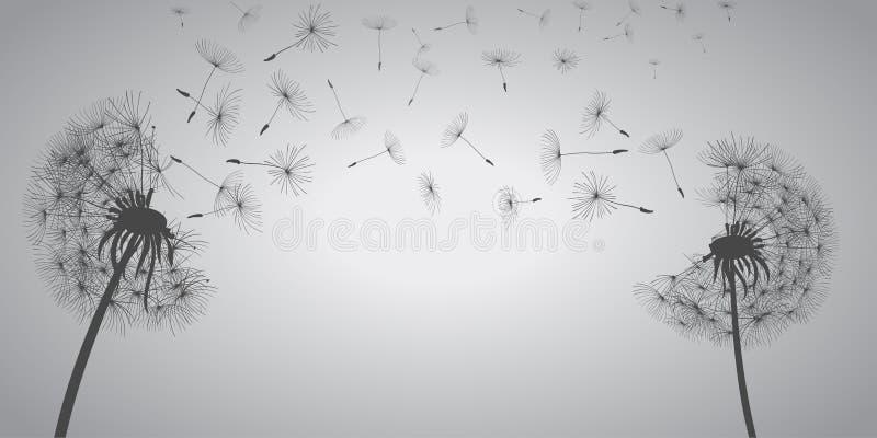 抽象白色蒲公英,与飞行种子的蒲公英-传染媒介 库存例证