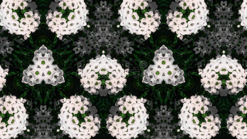 抽象白花照片样式 免版税库存照片