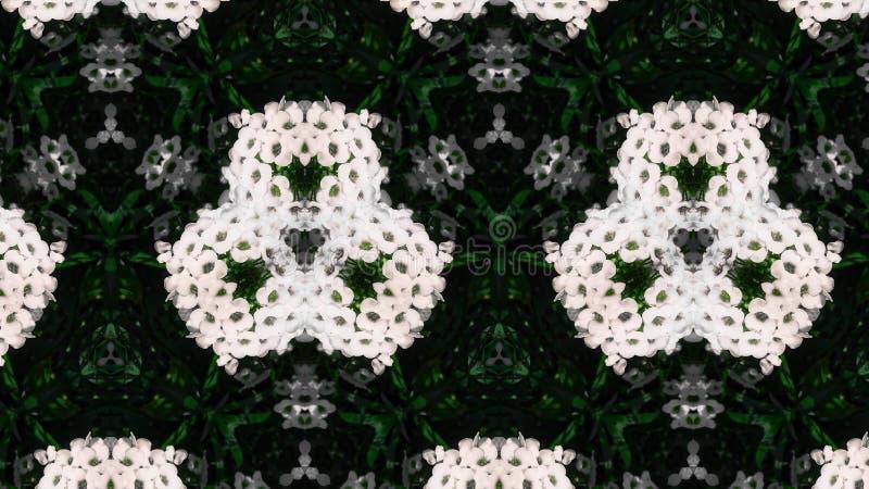 抽象白花照片样式 图库摄影