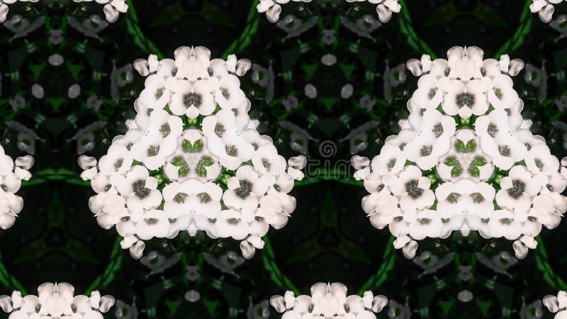 抽象白花照片样式 库存照片