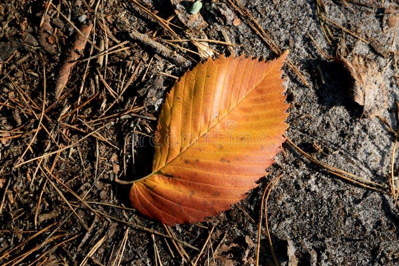 抽象秋天叶子 库存图片