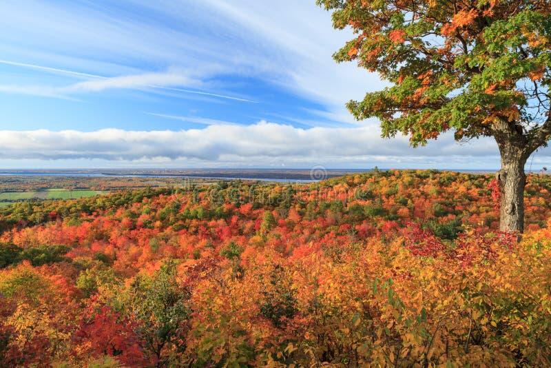 抽象秋天明亮的颜色下跌叶子好的模式红色半 免版税库存照片