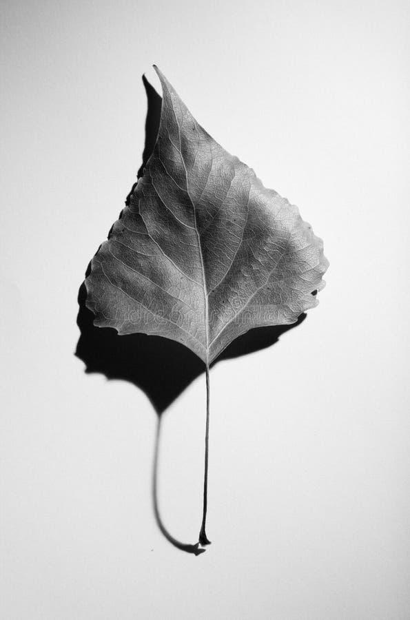 抽象秋天构成简单派样式 免版税图库摄影