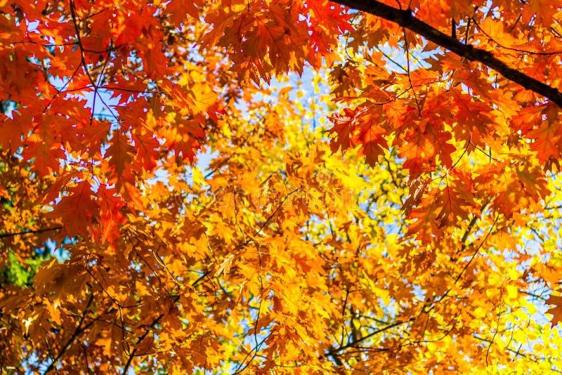 抽象秋天背景,老橙色叶子,干燥树叶子,软的焦点,秋季季节,改变自然,明亮的阳光 免版税库存图片