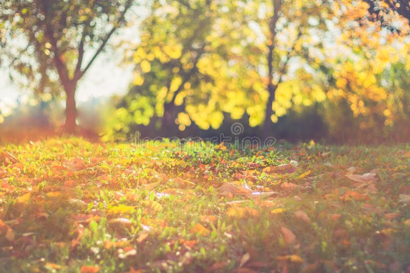 抽象秋天背景 五颜六色的叶子和bokeh被弄脏的背景 免版税库存图片