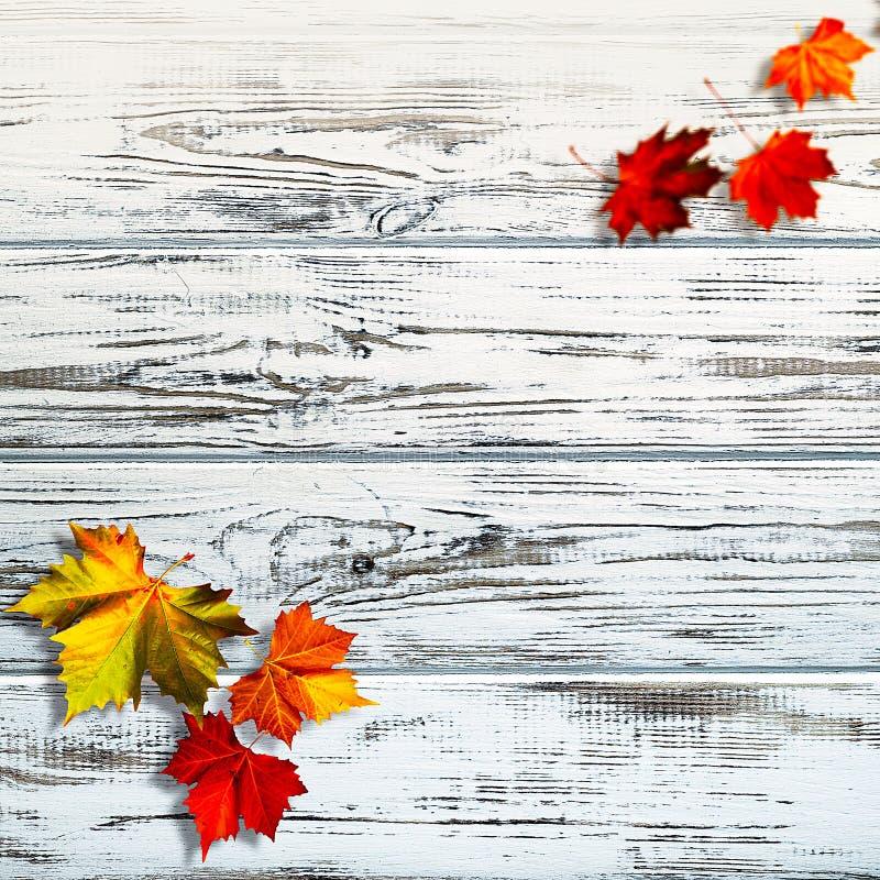 抽象秋季背景 免版税库存图片