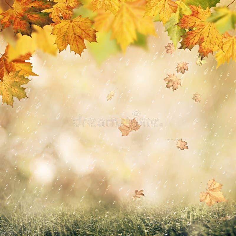抽象秋季背景 库存照片