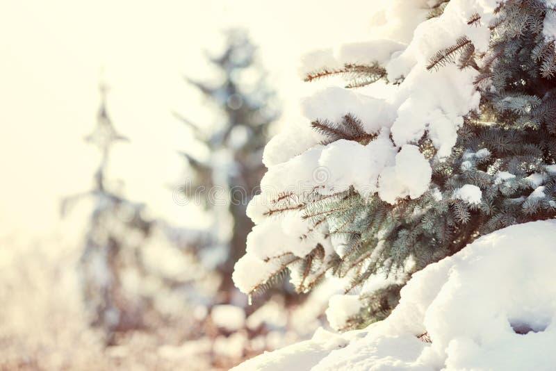 抽象空白背景圣诞节黑暗的装饰设计模式红色的星形 在雪下的新年树在街道上 免版税库存图片