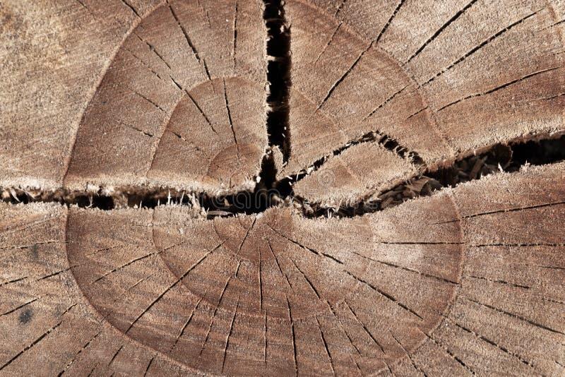 抽象纹理树桩,高明木古老 免版税库存图片