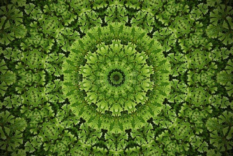 抽象绿叶弄脏了背景,青苔地被植物植物wi 库存例证