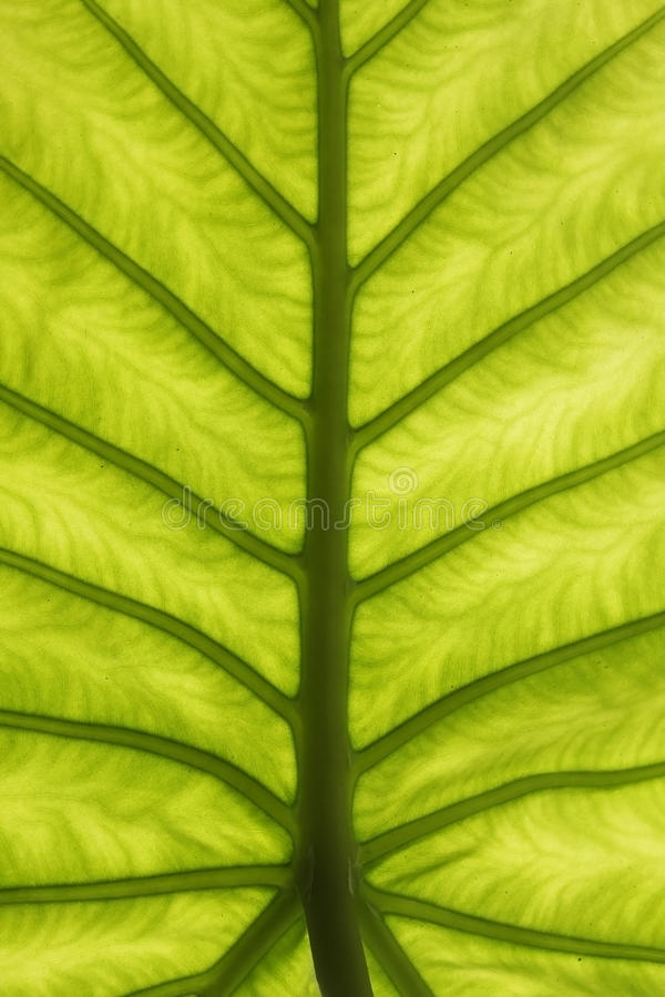 抽象绿色叶子纹理 库存照片