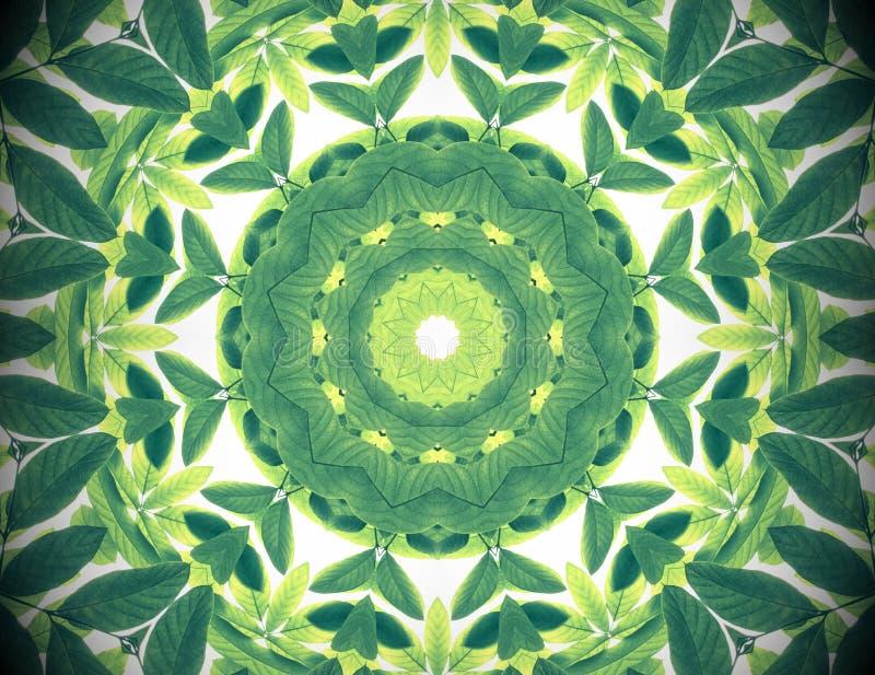 抽象绿色自然背景,热带绿色离开wi 库存照片