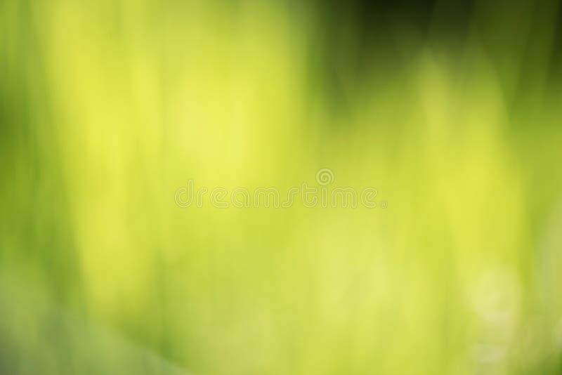 抽象绿色自然被弄脏的草背景 Bokeh?? 免版税库存照片