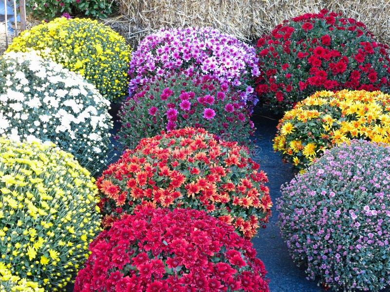 抽象美丽红色,蓝色, yelow,开花花束背景 库存照片