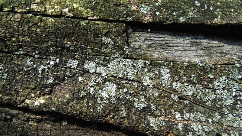 抽象老腐烂的树桩纹理 木墙壁背景 免版税库存图片